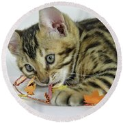 Fall Kitten Round Beach Towel by Shoal Hollingsworth