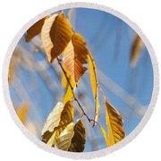 Fall Leaves Study 3 Round Beach Towel
