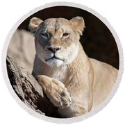Fall Lioness Round Beach Towel