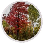 Round Beach Towel featuring the photograph Fall Maple by Paul Freidlund