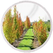 Fall On The Tree Farm Round Beach Towel