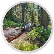 Round Beach Towel featuring the photograph Fallen Tree- by JD Mims