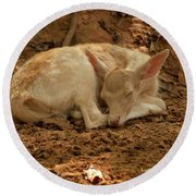 Round Beach Towel featuring the photograph Fallow Deer Fawn Sleeping by Chris Flees