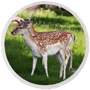 Fallow Deer In Richmond Park Round Beach Towel