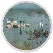 Family Of Swans Round Beach Towel
