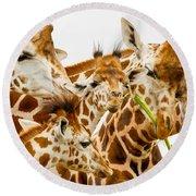 Family Rotschild's Giraffe Round Beach Towel