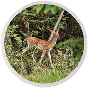 Fawn In The Woods Round Beach Towel by Rick Friedle