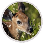 Fawn In Wildflowers Round Beach Towel