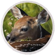 Fawn Over The Shoulder Round Beach Towel