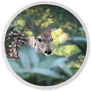 Fawn Peeking Through Bushes Round Beach Towel