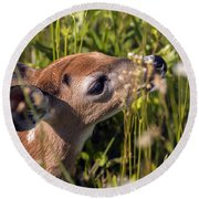 Fawn Smelling The Wildflowers Round Beach Towel