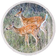 Fawns At Bigfork Round Beach Towel