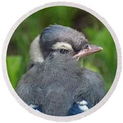 Round Beach Towel featuring the photograph Feathered Jay by James Peterson