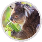 Feed Me, Yanchep National Park Round Beach Towel