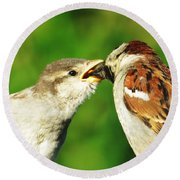 Round Beach Towel featuring the photograph Feeding Baby Sparrow 3 by Judy Via-Wolff