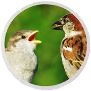Round Beach Towel featuring the photograph Feeding Baby Sparrows 2 by Judy Via-Wolff