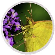 Round Beach Towel featuring the photograph Feeding Butterfly by Jay Stockhaus