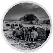 Round Beach Towel featuring the photograph Feeding Time by Keith Elliott