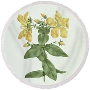Feel-fetch - Hypericum Quartinianum Round Beach Towel