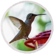Round Beach Towel featuring the photograph Female Anna's Hummingbird V24 by Mark Myhaver