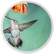 Female Black-chinned Hummingbird Round Beach Towel