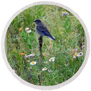 Female Bluebird Round Beach Towel