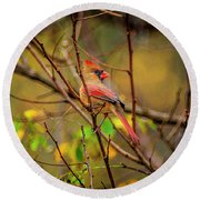 Female Cardinal #1 Round Beach Towel