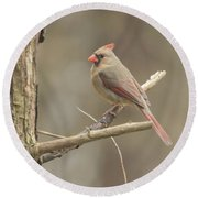 Female Cardinal Round Beach Towel
