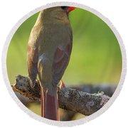 Female Cardinal Round Beach Towel