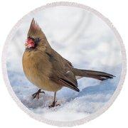 Female Cardinal In Snow Round Beach Towel