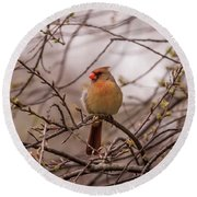Round Beach Towel featuring the photograph Female Cardinal In Spring 2017 by Terry DeLuco