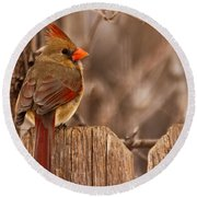 Female Cardinal On The Fence Round Beach Towel