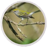 Female Chestnut-sided Warbler Round Beach Towel