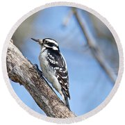 Female Downey Woodpecker 1104  Round Beach Towel by Michael Peychich