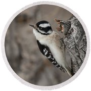 Female Downey Woodpecker Round Beach Towel