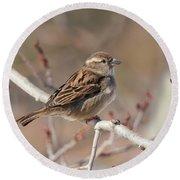 Female House Sparrow Round Beach Towel