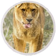 Female Lion Round Beach Towel