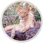 Female Lion Resting Round Beach Towel