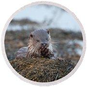 Female Otter Eating Round Beach Towel