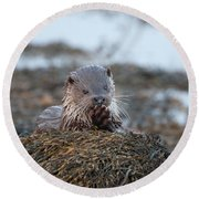 Female Otter Eating Round Beach Towel