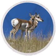 Female Pronghorn Antelope Round Beach Towel