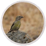 Female Red Crossbill Round Beach Towel