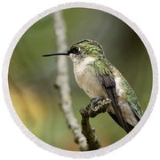 Female Ruby-throated Hummingbird On Branch Round Beach Towel