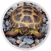 Female Russian Tortoise Round Beach Towel