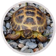 Female Russian Tortoise Round Beach Towel