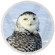 Female Snowy Owl Round Beach Towel