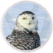 Female Snowy Owl Round Beach Towel