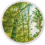 Round Beach Towel featuring the photograph Female Tree.  by Leif Sohlman