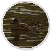Round Beach Towel featuring the photograph Female Wigeon by Jeff Swan