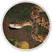 Round Beach Towel featuring the photograph Fer-de-lance, Botherops Asper by Breck Bartholomew
